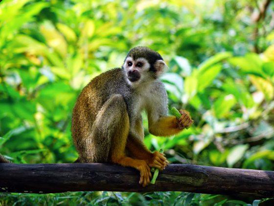 De aap op mijn schouder